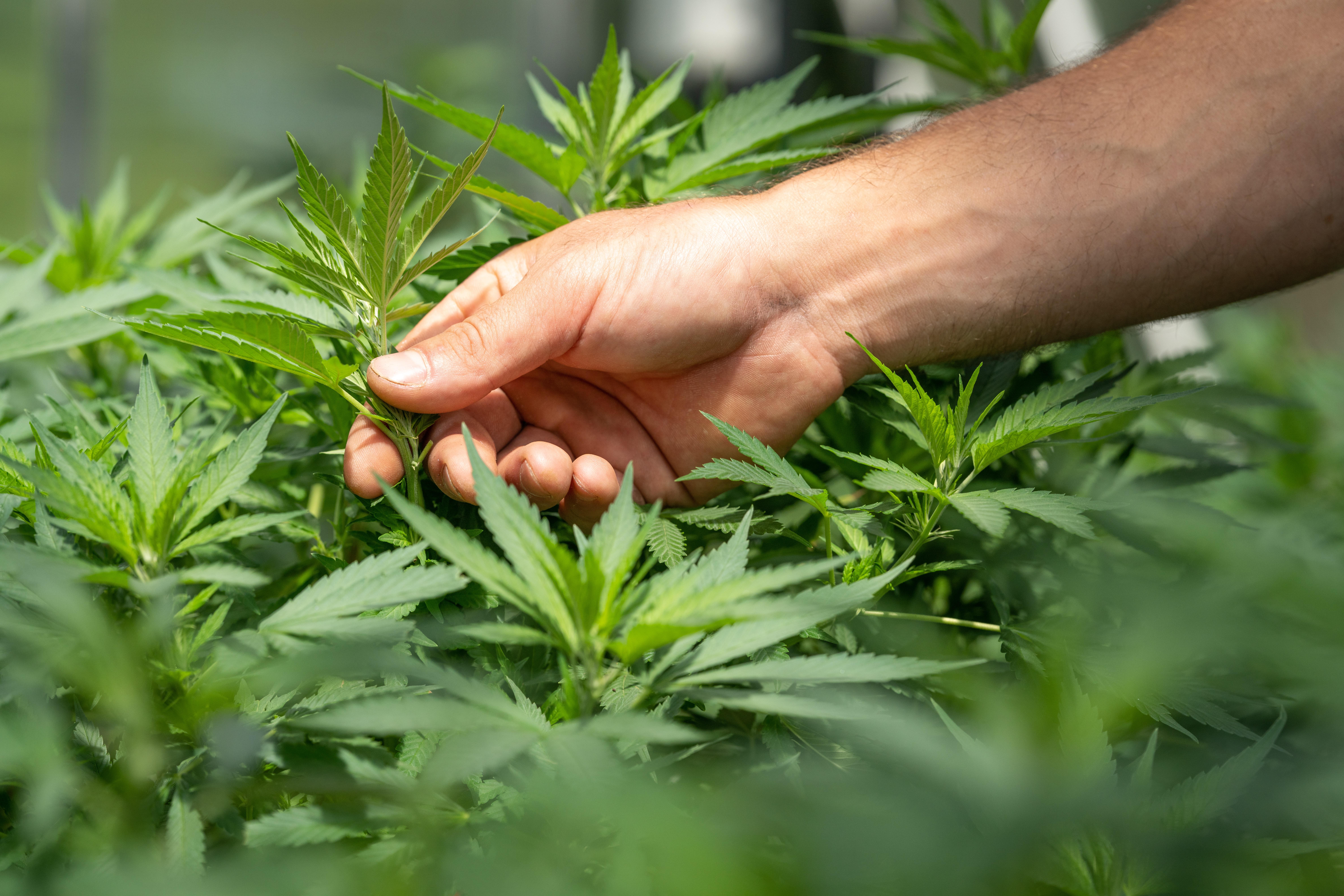 SiliCycle signs a Letter of Intent with the Société Québécoise du Cannabis (SQDC)